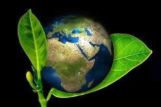 terra avvolta da grandi foglie verdi