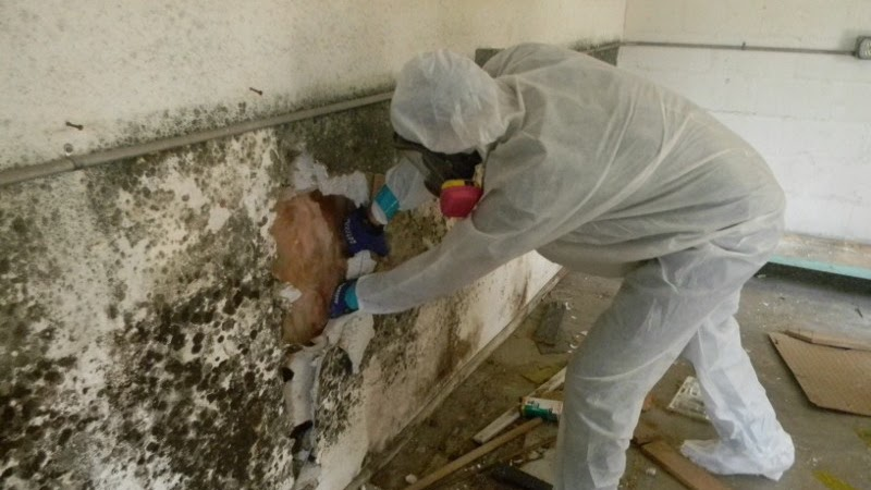 Mold Growth, Assessment, And Remediation - House Mold Removal
