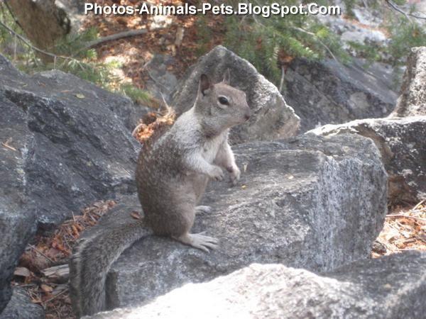 http://4.bp.blogspot.com/-J8Qt2H5qJKA/ThiKcCThBaI/AAAAAAAABnI/QkyAN0rvLRA/s1600/Squirrel%2Bpics_0001.jpg