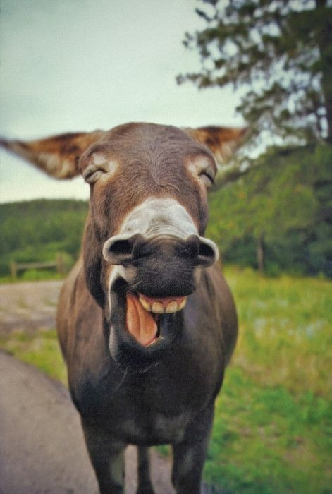 donkey is happy