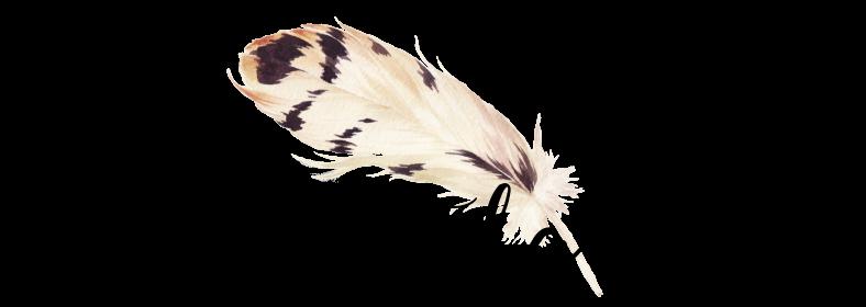 Le vent et la plume