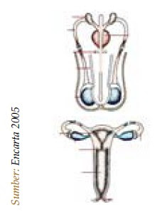 Rangkuman Sistem Reproduksi Manusia