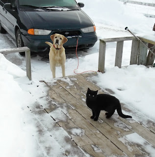 Cat and Dog friends