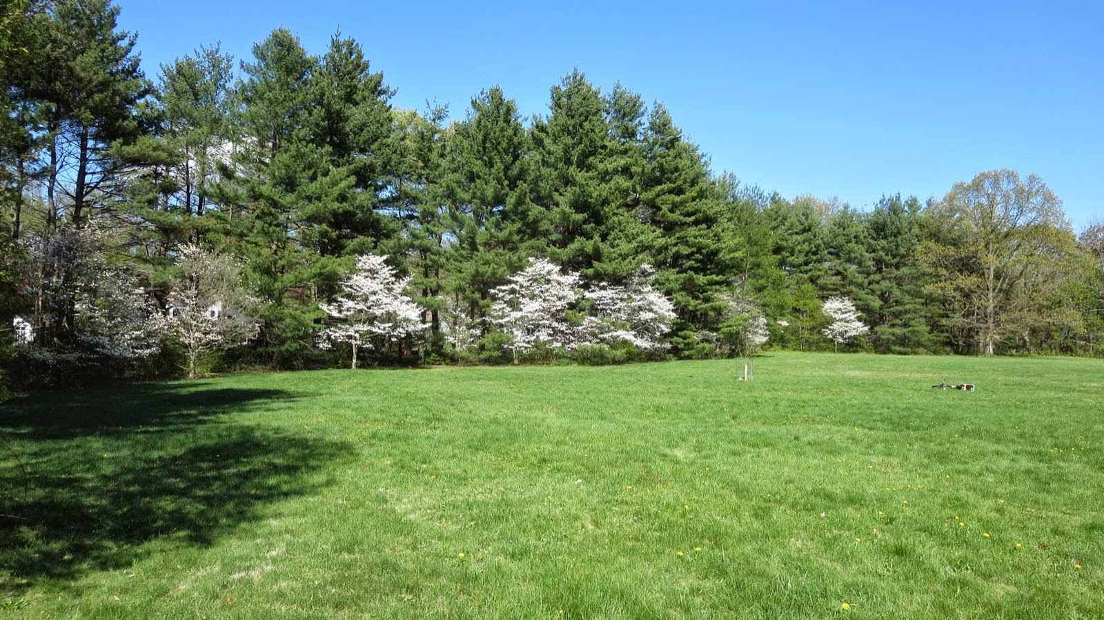 Some Horticultural History: Dogwoods at Princeton Battlefield ...
