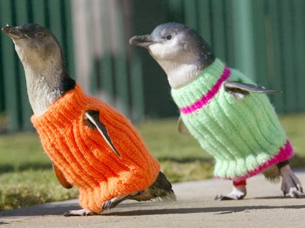 Funny animals of the week - 28 February 2014 (40 pics), two penguins wear sweater