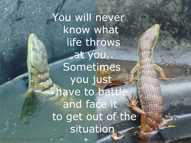 face and battle fight whatever struggles problems challenges trials life throws at you