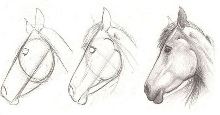 How to draw a horse head in 3 easy step learn to draw for Learning to paint and draw