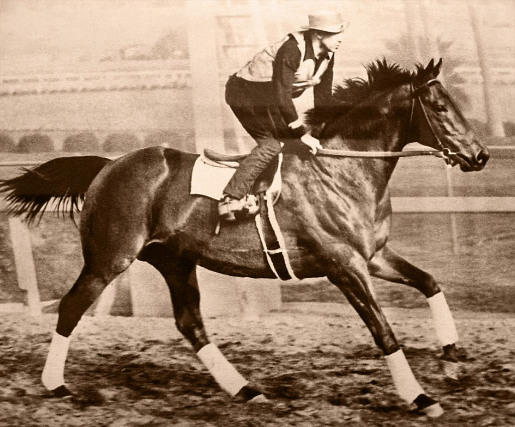 Seabiscuit the race horse.