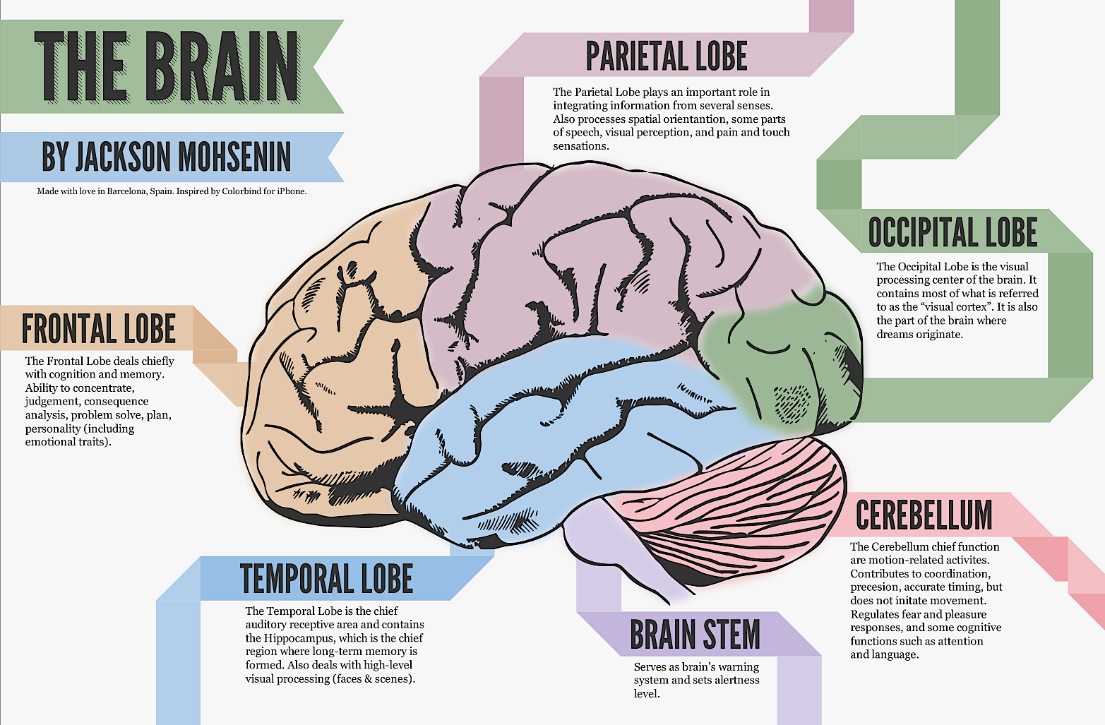 Parts Of The Brain And Their Functions Top View - Viewing ...