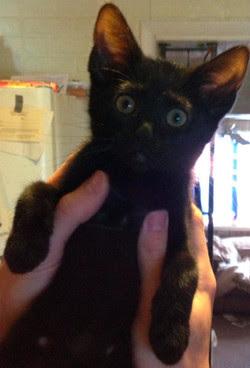 Foto anak kucing yang pertama kali mendengarkan lagu terbaru MGMT