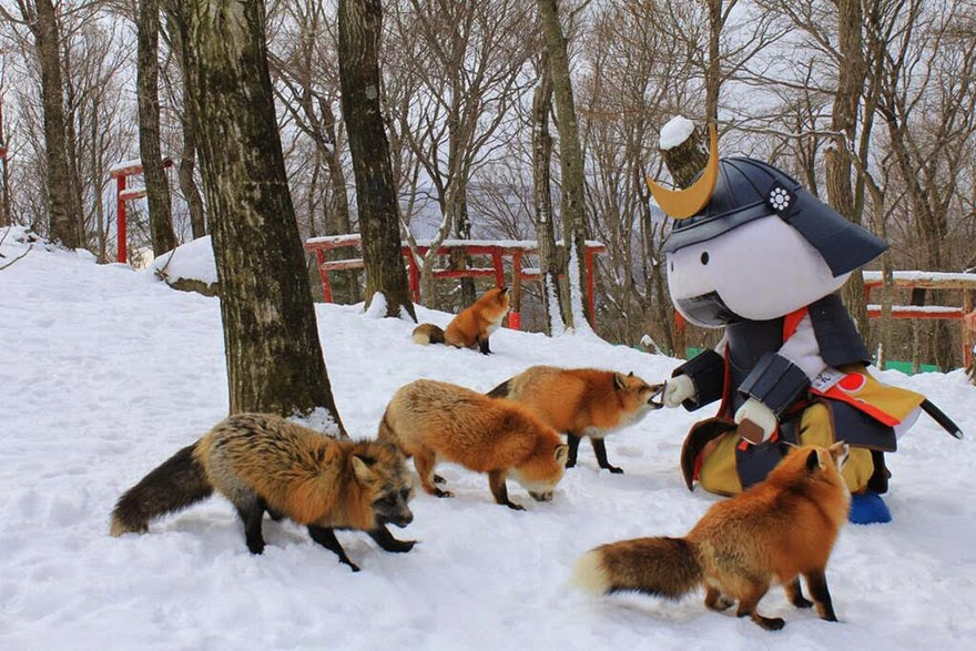 zao fox village japan adorable photos-2