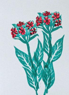 Dit jaar had ik deze meerjarige plant met intens rode bloemen voor het