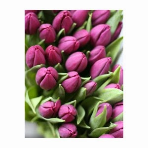 http://www.floristvancouver.com/shop/tulips/