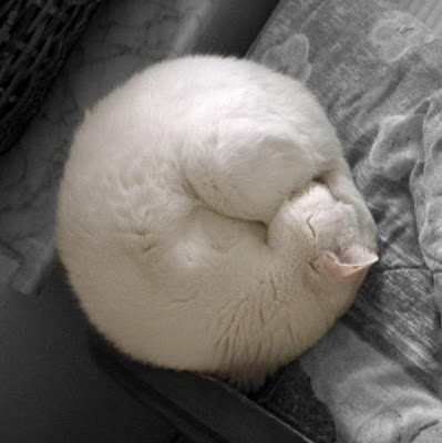 Posisi Tidur Sexy
