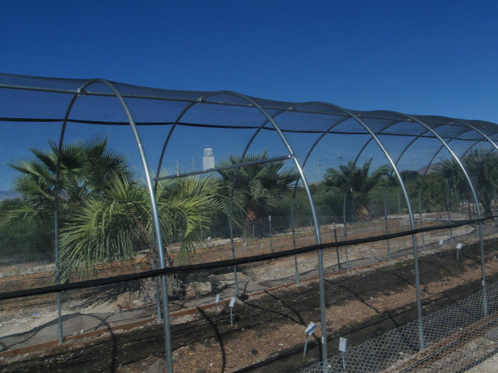 Hoophouse With 30% Shade At The Orchard