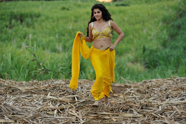 tapsee new spicy saree in mogudu