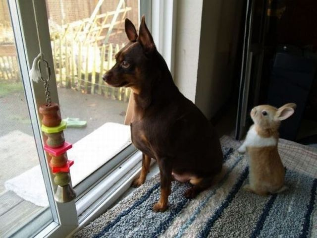funny animals, dog and bunny