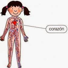 http://primerodecarlos.com/SEGUNDO_PRIMARIA/octubre/aparato_circulatorio.swf
