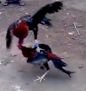 terbang dan memukul