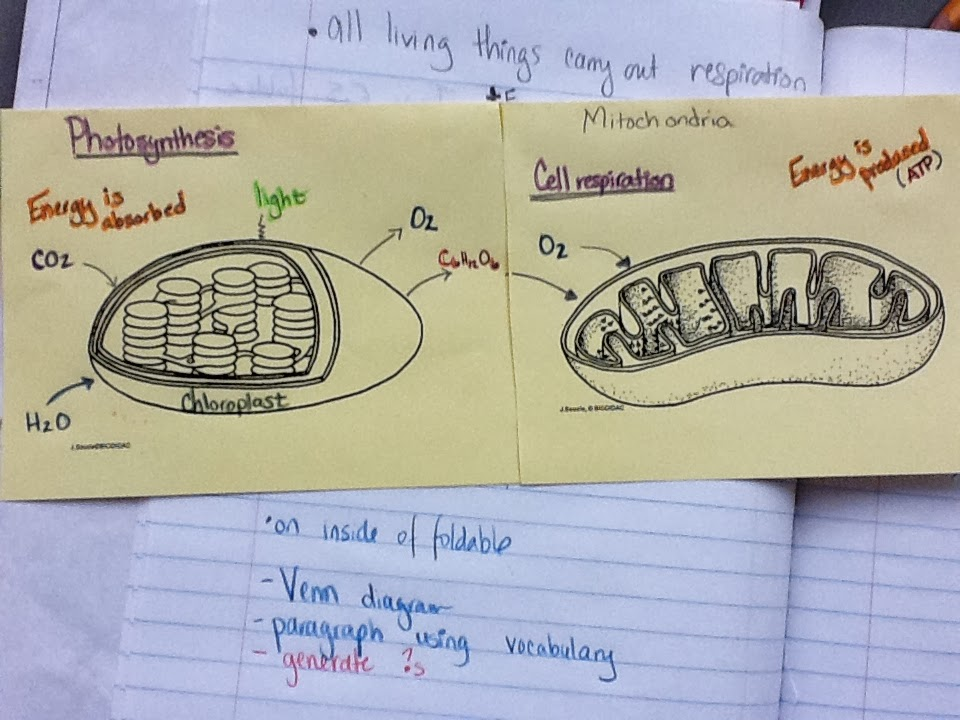 compare and contrast photosynthesis and respiration
