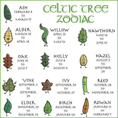 Walking The Path Of Spirit Greatness The Celtic Tree Zodiac