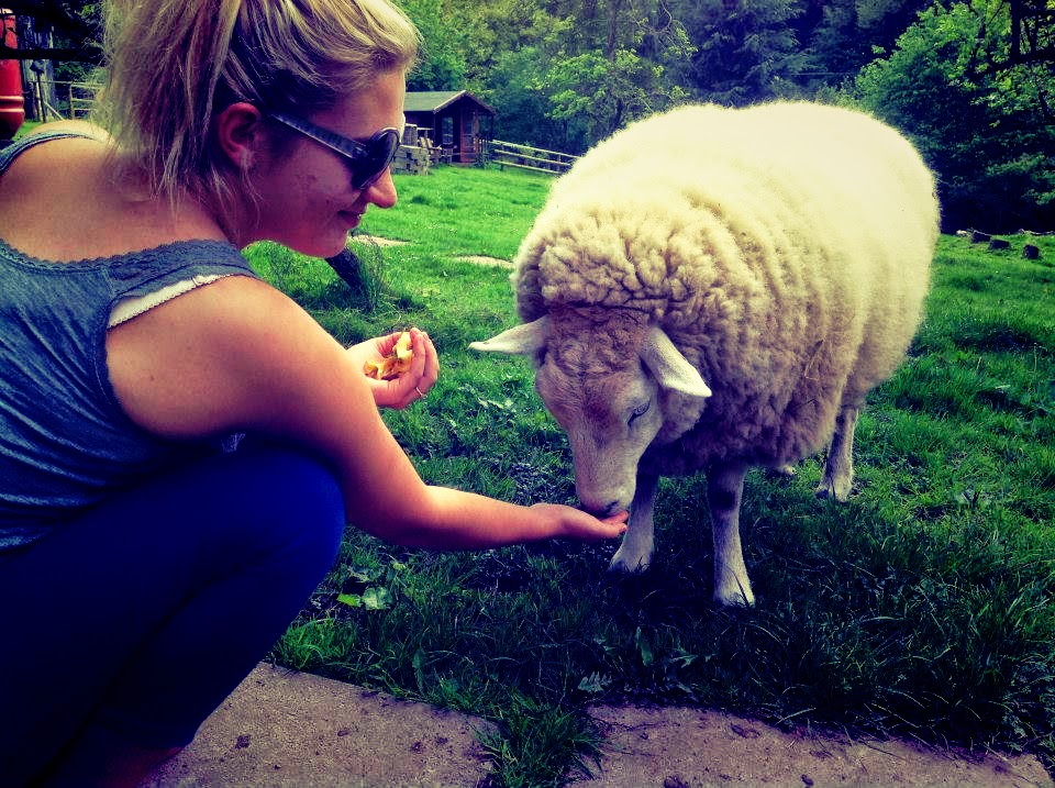 Housesitting Sheep