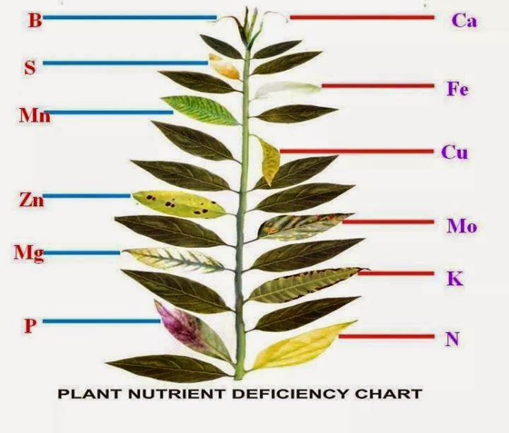 Plant-Nutrient-Deficiency-Chart