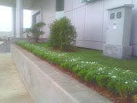 gardena mini atau melati jepang untuk di planter box