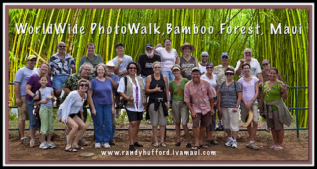 Bamboo Forest Maui4
