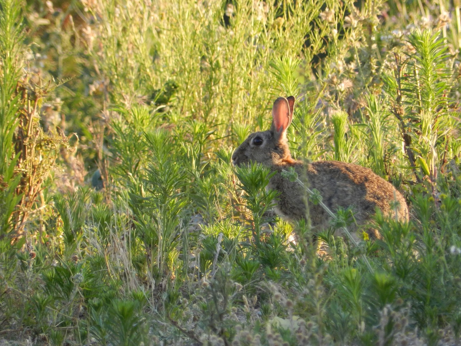 Rencontre 2 lapins
