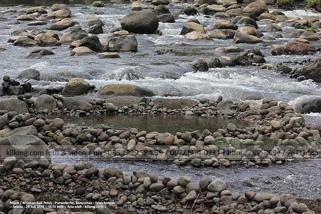 Mijah Mijahan Kali Pelus - Purwokerto, Banyumas - Jawa tengah. Foto oleh KLIKMG Fotografer Banyumas, Fotografer Indonesia