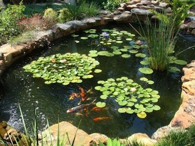 วิธีการออกแบบตกแต่งบ่อปลาในสวน Fish Tank Garden