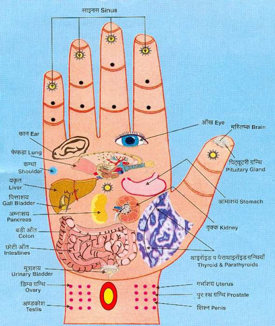 palm , be healthy , blody , pressure points , organs , massaging , do it yourself