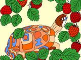 Tartaruga Comilona