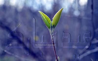 Plant Petals Eid-ul-Adha Mubarak Cards Urdu Text