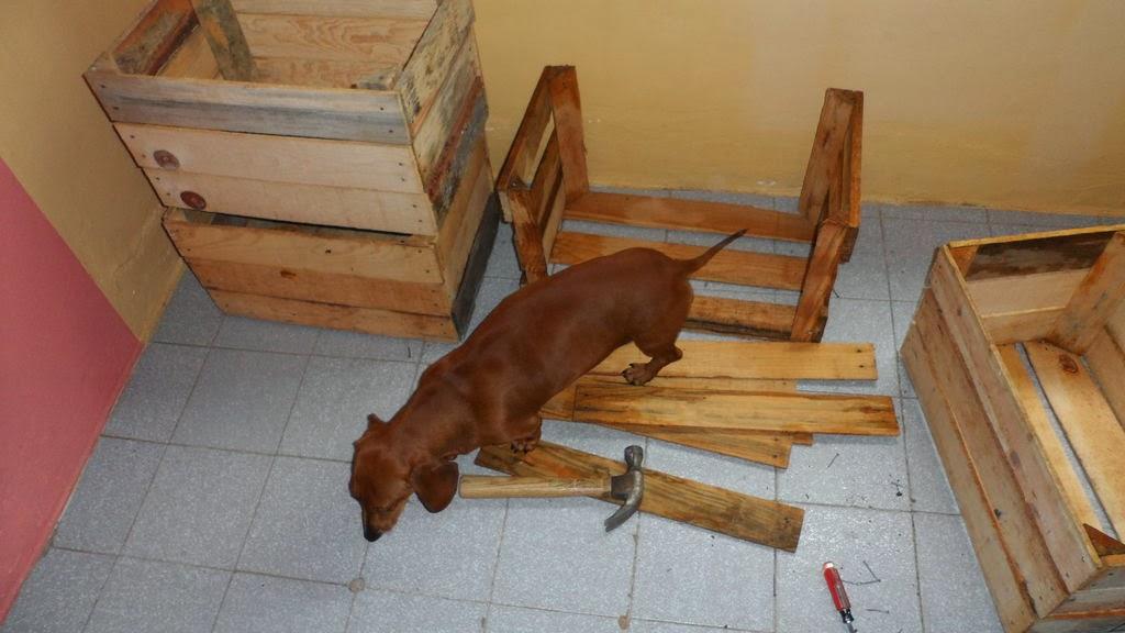 Caseta para perros hecha con cajas de - Construir caseta de madera ...