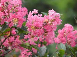 季美の森 中古住宅 Blogの花