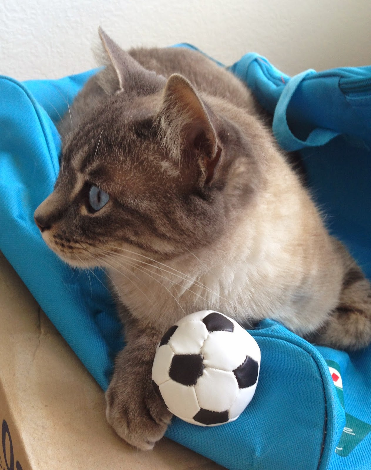 jeu balle foot chat