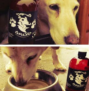 cerveja para cães