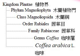 咖啡植物學分類
