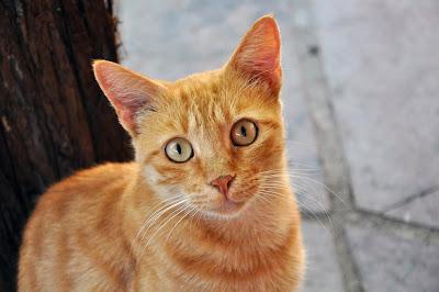 Los gatos y su oído agudo