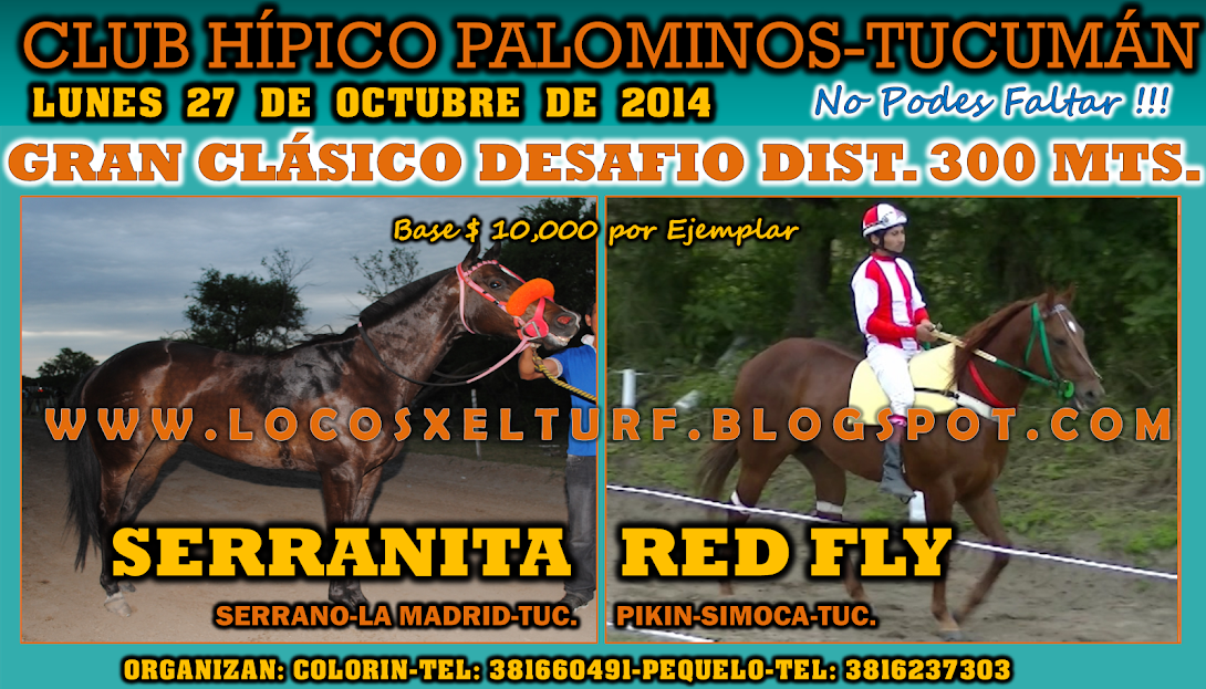 27-10-14-CLAS-HIP. PALOMINOS