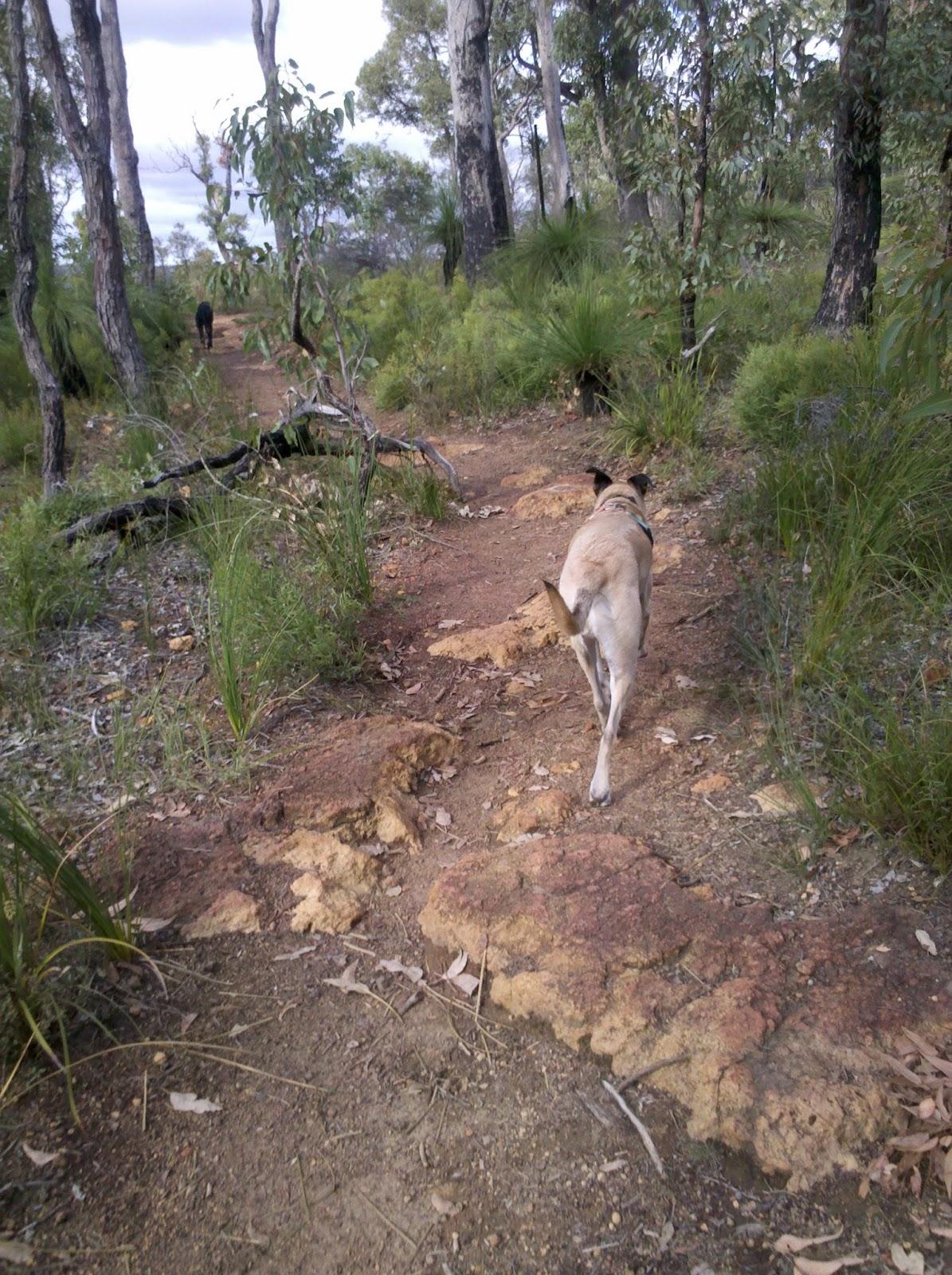 Jorgensen Park Kalamunda Dog