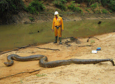 anaconda-gigante
