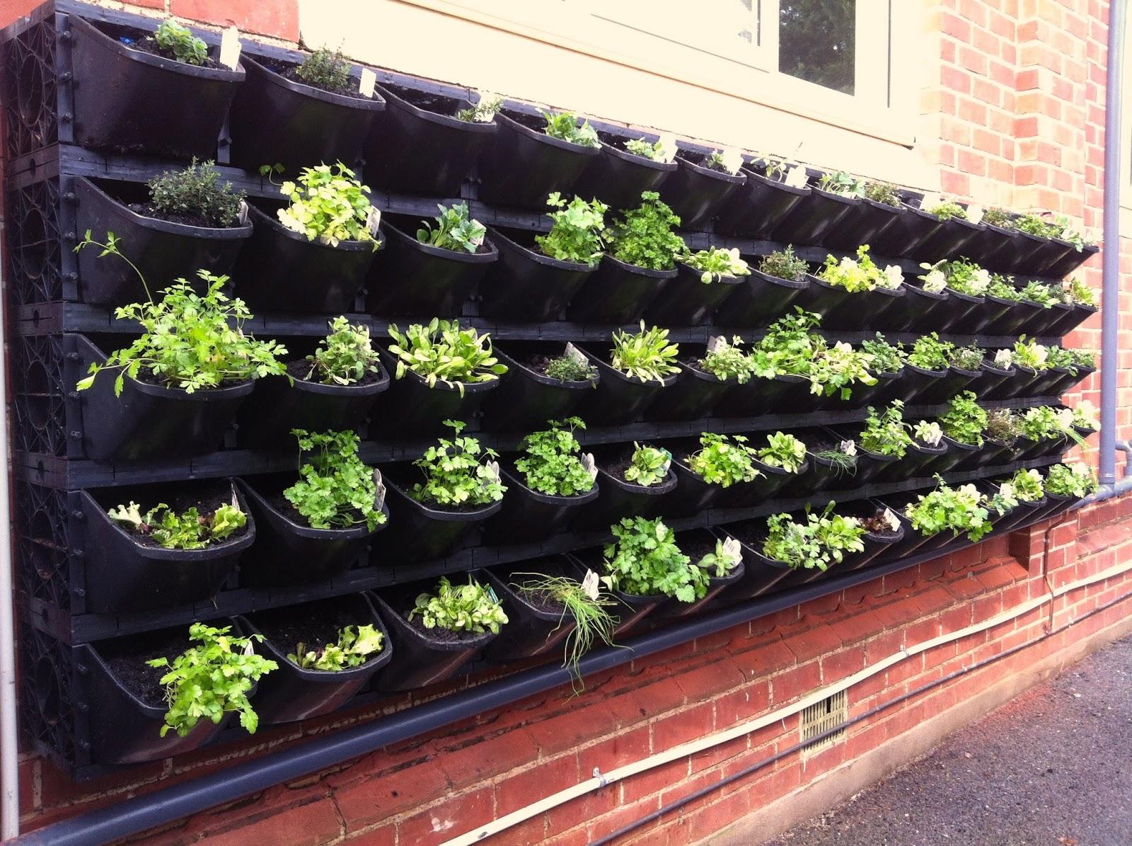 boisvert councillor for clarence park ward vertical garden at cpcc
