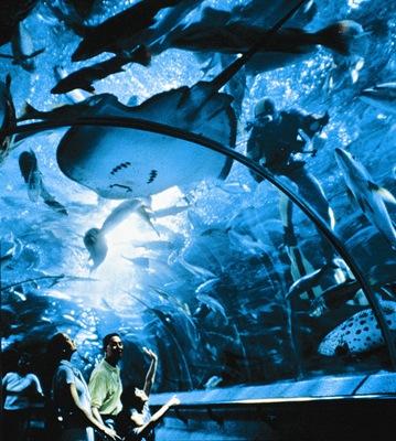 thesis on oceanarium Ocean park hong kong, commonly known as ocean park, is a marine mammal park, oceanarium,.