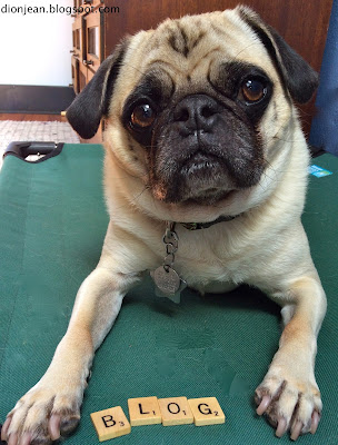 Liam the pug spells beautifully for this pet blog