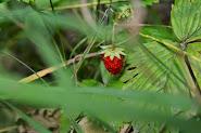 Flora Dary Natury  i to co nas otacza Organic plant