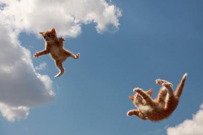 É o efeito paraquedas que salva gatos de grandes quedas Gatos