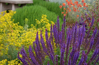 flori rezistente la seceta design aranajament floral santolina salvia